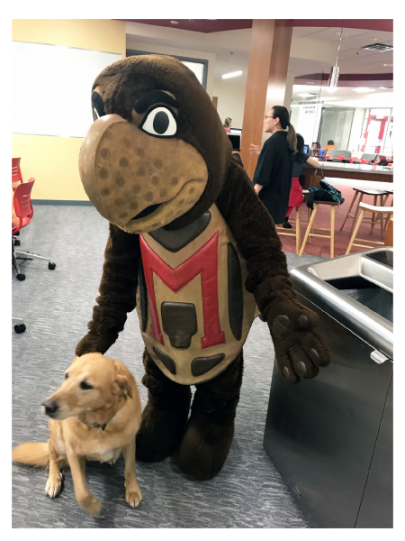 testudo with a therapy dog